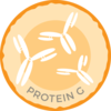 Anti-Lactoferrin IgG